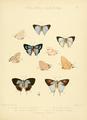 IllustrationsDiurnalLepidoptera2Plate20.png