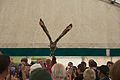 Indian Eagle Owl, Cheshire Game and Country Fair 2014 3.jpg