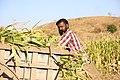 Indian village peoples 33.jpg