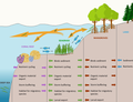 Interdependencies of coral reef, seagrass and mangrove ecosystems.png