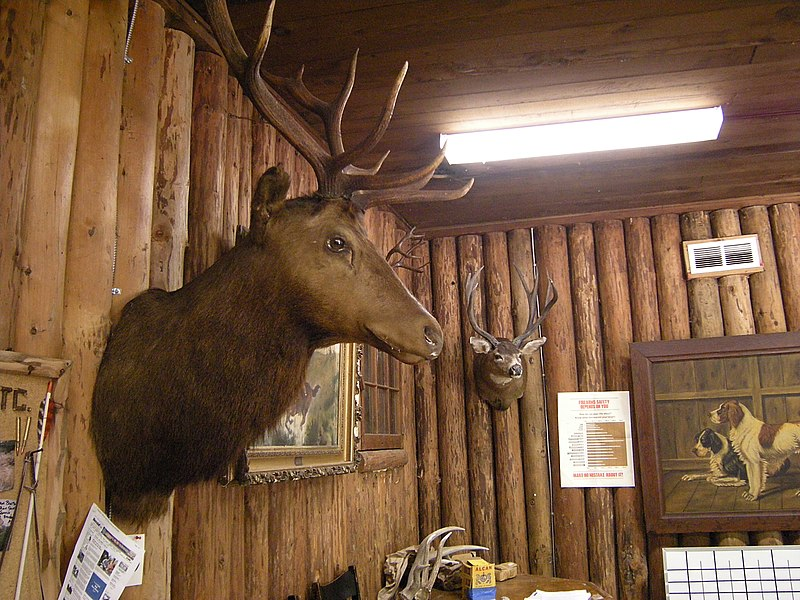 ファイル:Issaquah Sportsmen's Club elk head.jpg