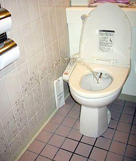 Toilet Wikimedia Commons