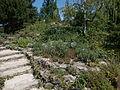 Japanese Garden. Stair. - Margaret Island, Budapest, Hungary.JPG
