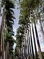 Jardim Botânico, Rio de Janeiro - State of Rio de Janeiro, Brazil - panoramio.jpg