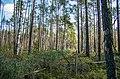 Jersikas pagasts, Latvia - panoramio (6).jpg
