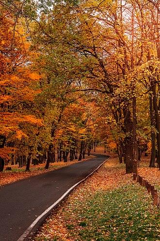 Košutnjak - Autumn in Košutnjak