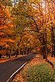 Jesen u Kosutnjaku.jpg