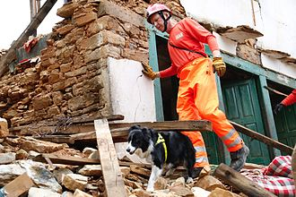 Search and rescue dog - A dog and handler search for survivors of the April 2015 Nepal earthquake.