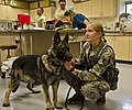 Joint Base Lewis-McChord veterinary clinic takes care of the military and its families DVIDS419083.jpg