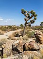 Joshua Tree National Park (California, USA) -- 2012 -- 5688.jpg