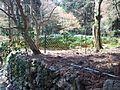 Kôzan-ji Buddhist Temple - Tea garden.jpg