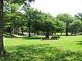 Kastell Saalburg - panoramio (1).jpg