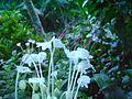 Kerala flowers special.jpg