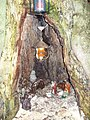 Kerststal - panoramio (1).jpg