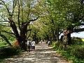 Kitakami tenshouchi park - panoramio.jpg