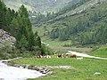Knuttental,Valle dei Dossi - panoramio (20).jpg