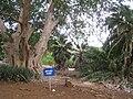 Koko Crater Botanical Garden - IMG 2348.JPG