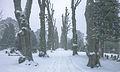 Kolding Cemetery, snowy.jpg