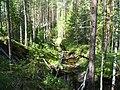 Kortkerossky District, Komi Republic, Russia - panoramio (4).jpg