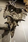 Kosmoceratops richardsoni skull salt lake city.jpg