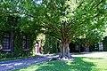 Kurashiki Ivy Square10n4592.jpg