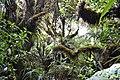 L'entre de la forêt de Takamaka Bébour.jpg
