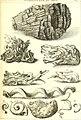 L'histoire naturelle éclaircie dans deux de ses parties principales, la lithologie et la conchyliologie - dont l'une traite des pierres et l'autre des coquillages - ouvrage dans lequel on trouve une (14595145350).jpg