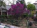 LOVE Tree in Tehran - panoramio.jpg