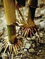 LPCC-795-Tiges de blat de moro.jpg