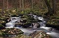 LSG Bayerischer Wald2 Otterbach Christine Landes.jpg