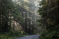 Lady Bird Johnson Grove in Northern California LCCN2013632714.tif