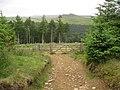Ladybower - Footpath View near Wooler Knoll - geograph.org.uk - 865165.jpg