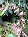 Lancut Storczykarnia 7.jpg