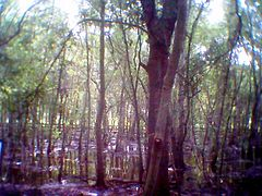 Largo Central Park Nature Preserve01.JPG
