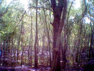 Largo, Florida - Boardwalk across wetlands in Largo Central Park Nature Preserve, the bed of former Lake Largo