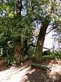 Leśmierz, park przyfabryczny-015.JPG