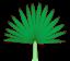 Leaf morphology posture plicate.png