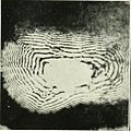 Liesegang rings obtained by the precipitation of silver chromate in gelatin (1882).jpg
