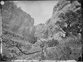 Limestone Canyon. East Humboldt Mountains, Nevada - NARA - 519501.tif