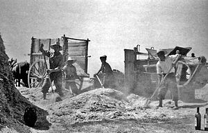 Threshing board - Cleaning the seed with a mechanical winnowing machine