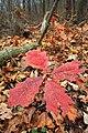 Lingering Autumn (3) (10792088024).jpg