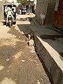 Local transportation in Tharparkar.jpg