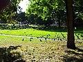 London, Woolwich, Shrewsbury Park06.jpg