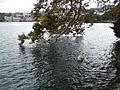 Lugano lake (8871591538).jpg