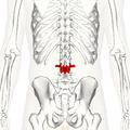 Lumbar vertebra 3 posterior2.png