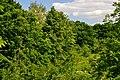 Lutsk Volynska-Dubovyi hai natural monument-view from Druzhby Narodiv boulevard-2.jpg
