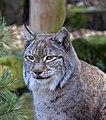 Lynx 4d (5512703050).jpg