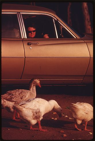 Buena Vista Lagoon - Motorists feed birds at Buena Vista Lagoon, 1975.  Photo by Charles O'Rear.