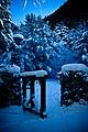 Magical Winter (57735778).jpeg