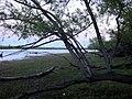 Magnífico Paraná de los Reyes - panoramio.jpg